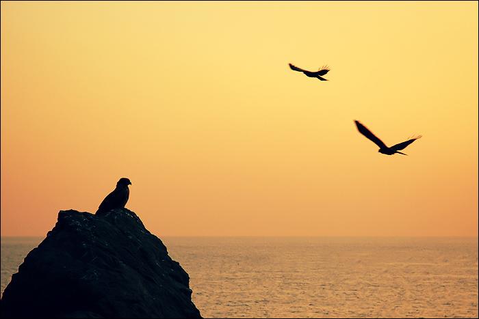 Les aigles d'Enoshima